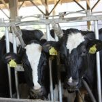 Baker-Polito Administration Awards Grants to Promote Massachusetts Dairy Industry